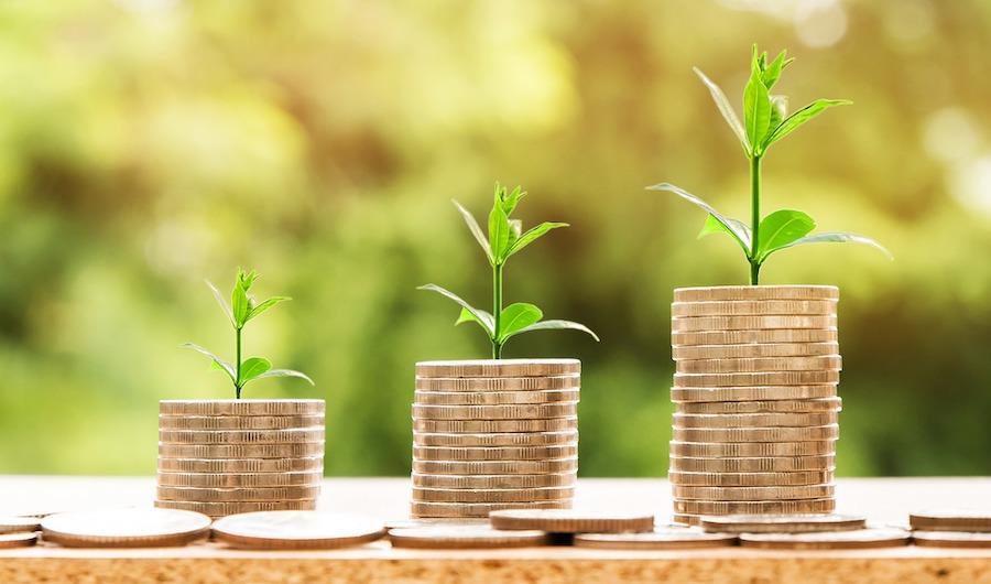 pflanze auf geld nachhaltigkeit im finanzsektor