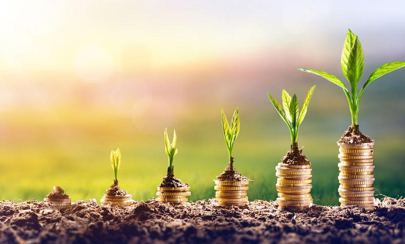 Planted Money OMS japanische wirtschaft